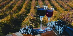 Weekday Napa and Sonoma Wine Country Tour (M-F)